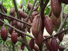kakao 180413