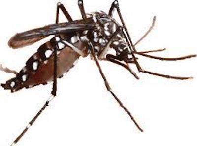 Peserta InasSEC 2014 Ditantang Buat Produk Atasi Persoalan Nyamuk