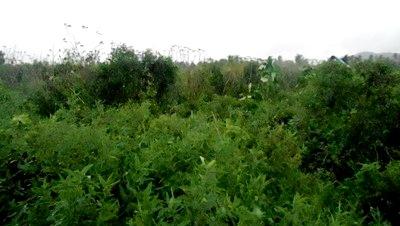 lahan cetak sawah Huta Puli