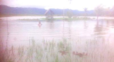 sawah direndam banjir di huraba