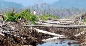 kerusakan hutan bakau