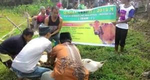 Ibadah qurban Mandailing Malaysia di tanah leluhur Idul Adha 1435 H yang lalu