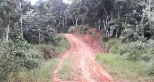 Jalan menuju 6 desa di Muara Batang Gadis