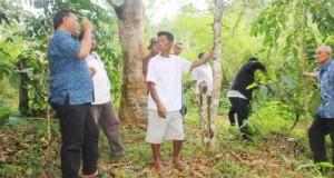 Bupati Dahlan Hasan meninjau lokasi percontohan