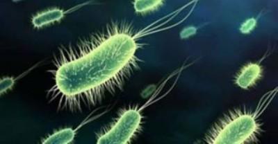 Virus difteri