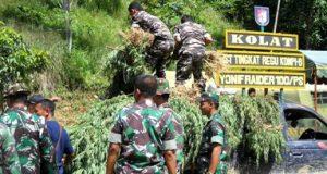 Pasukan TNI menurunkan tanaman ganja dari truk di Panyabungan Timur