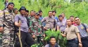 Personil gabungan TNI, Polres Madina dan FKPPI di lokasi penemuan ladang ganja, Panyabungan Timur