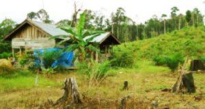 gubuk petani miskin di lahan kebun