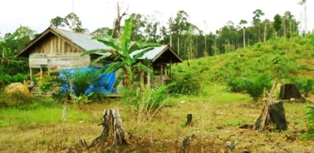 Pemkab Madina Polisi Diminta Tak Kaku Soal Petani Bakar Hutan