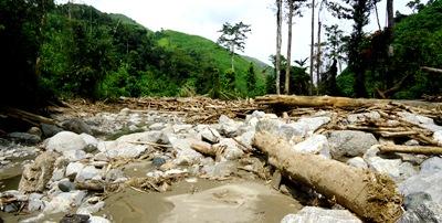 Hutan Rantopuran gundul dan bangkai-bangkai kayu sekitar 1 km dari Sopo Batu. foto tahun 2013