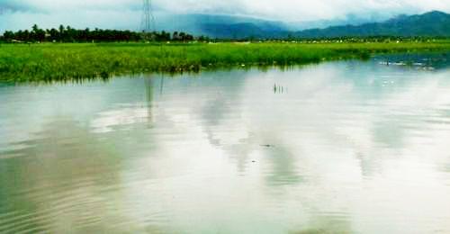 Hamparan persawahan di kawasan Hutapuli sudah seperti lautan akibat banjir